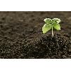 Земля растительная, Почвогрунт приготовленный, Грунт для рассады, Чернозем, Навоз.